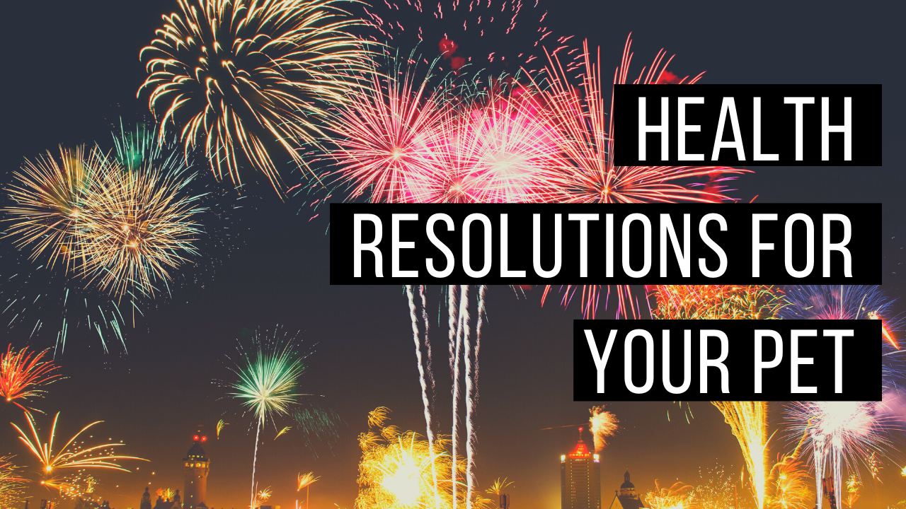 Resolutions for your pets