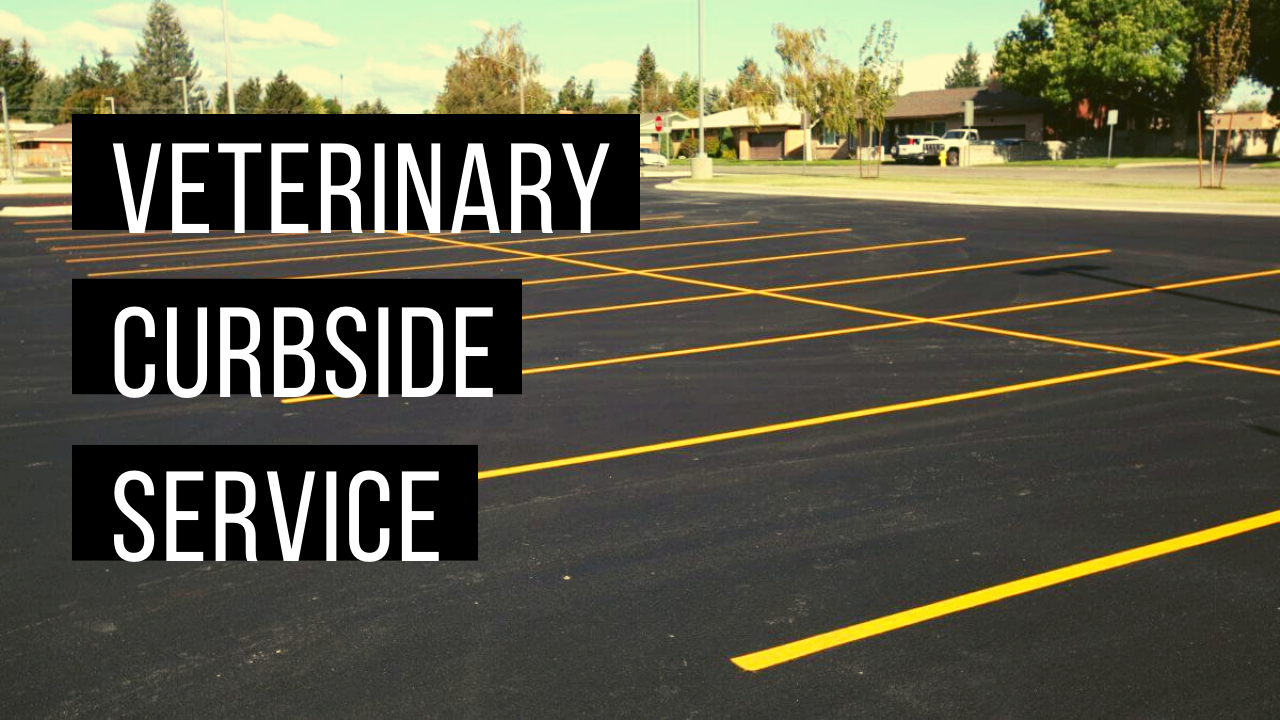 Curbside veterinary care visits