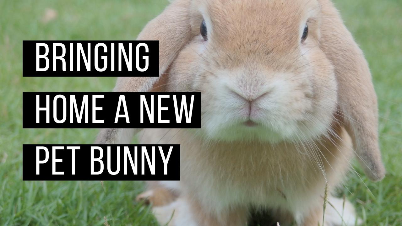 Bringing home a bunny