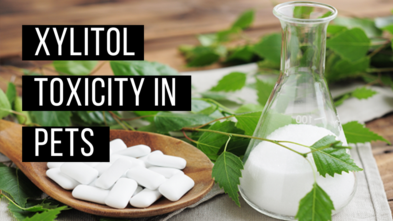 Xylitol Toxicity