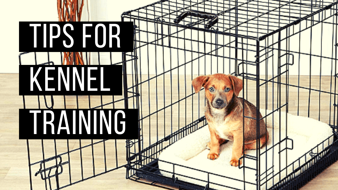 Tips for kennel training your new furry friend