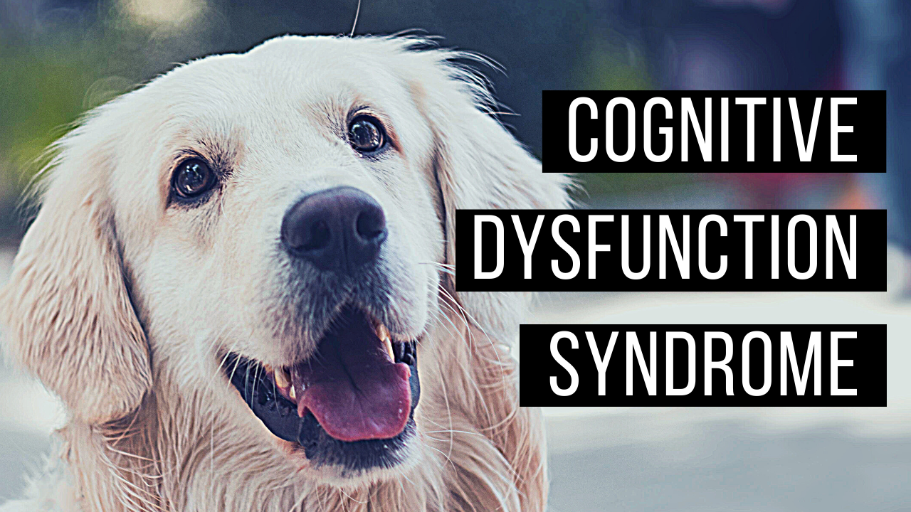 Cognitive decline in aging pets