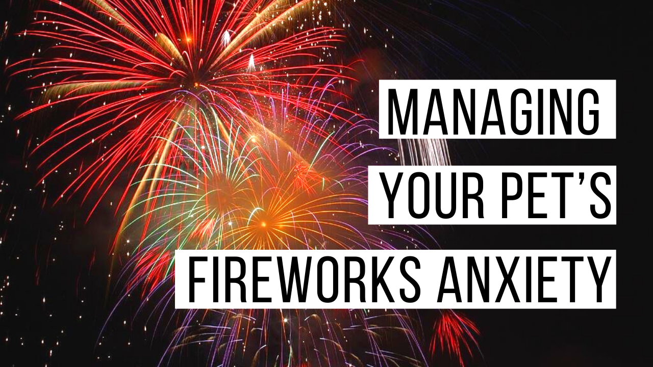 Managing fireworks anxiety