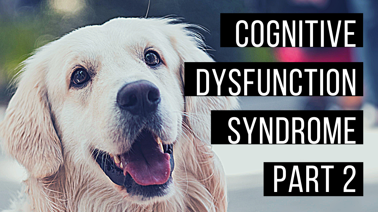 Managing cognitive decline in aging pets
