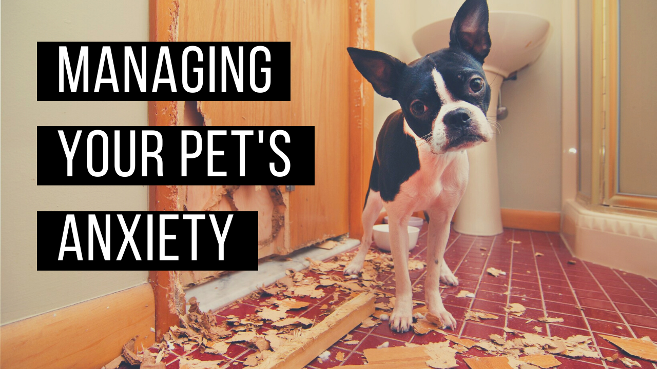 Managing your pet's anxiety