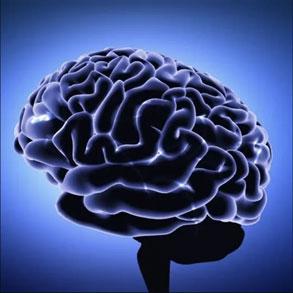 quantum neurology