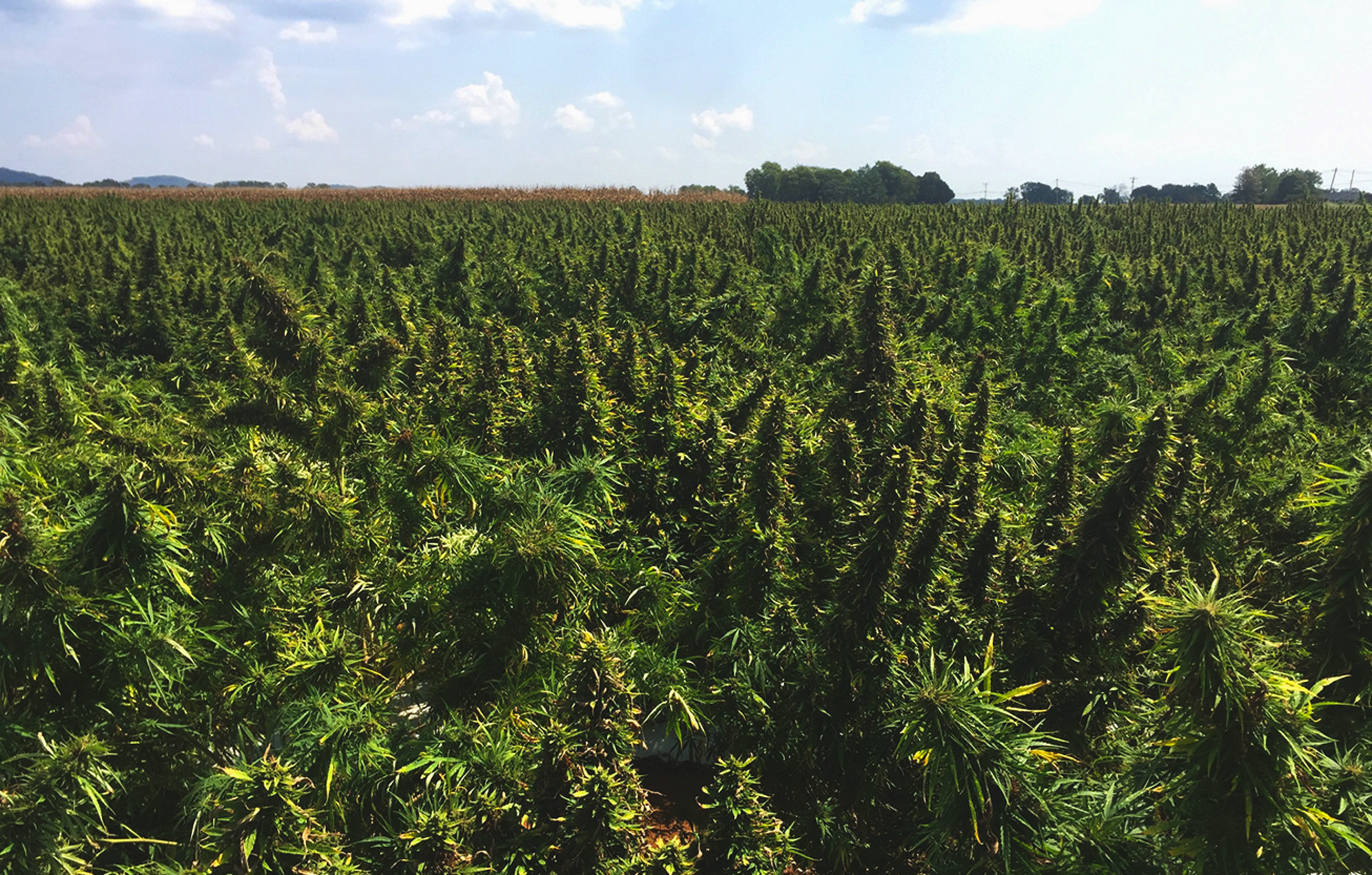Land stewardship in hemp cultivation
