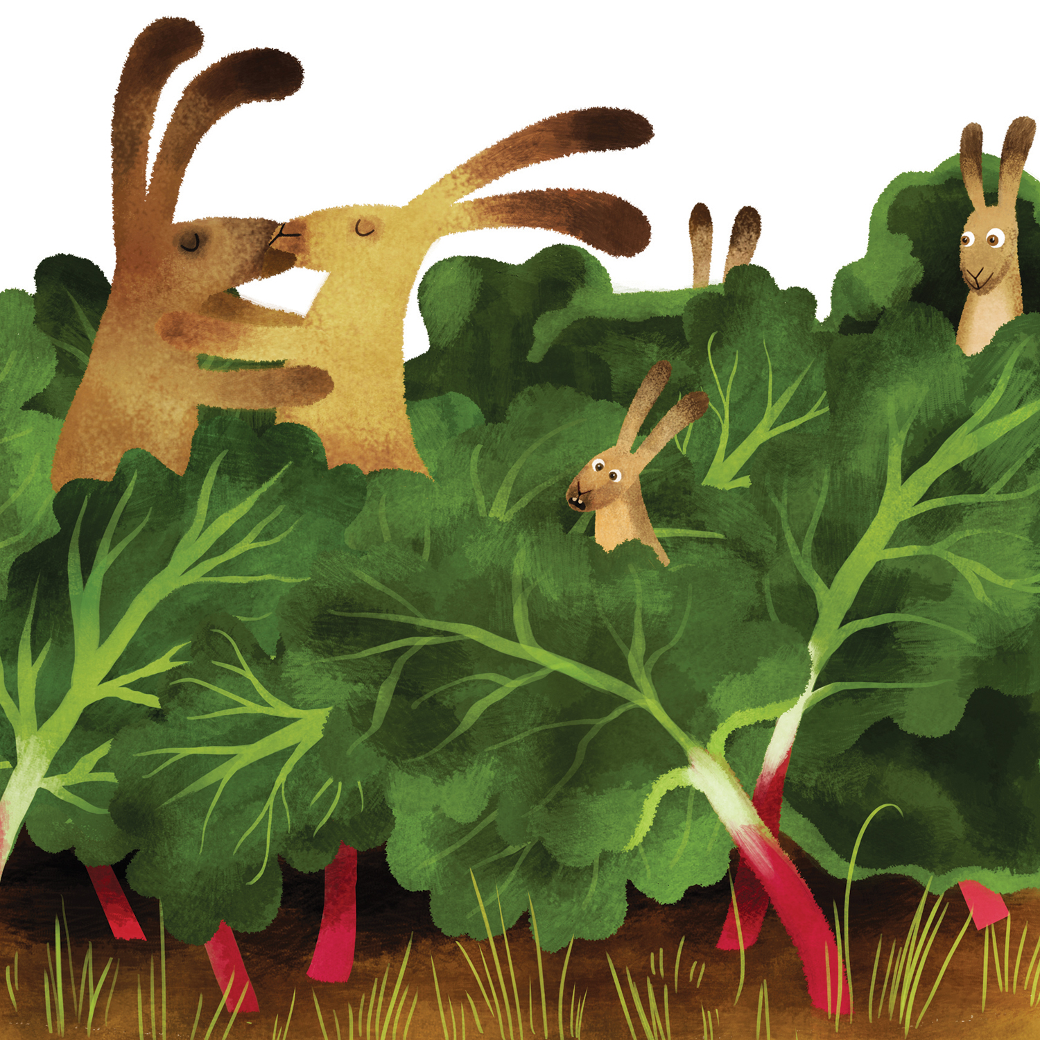 Kinnegar rabbits in the rhubarb patch. Walla Walla.