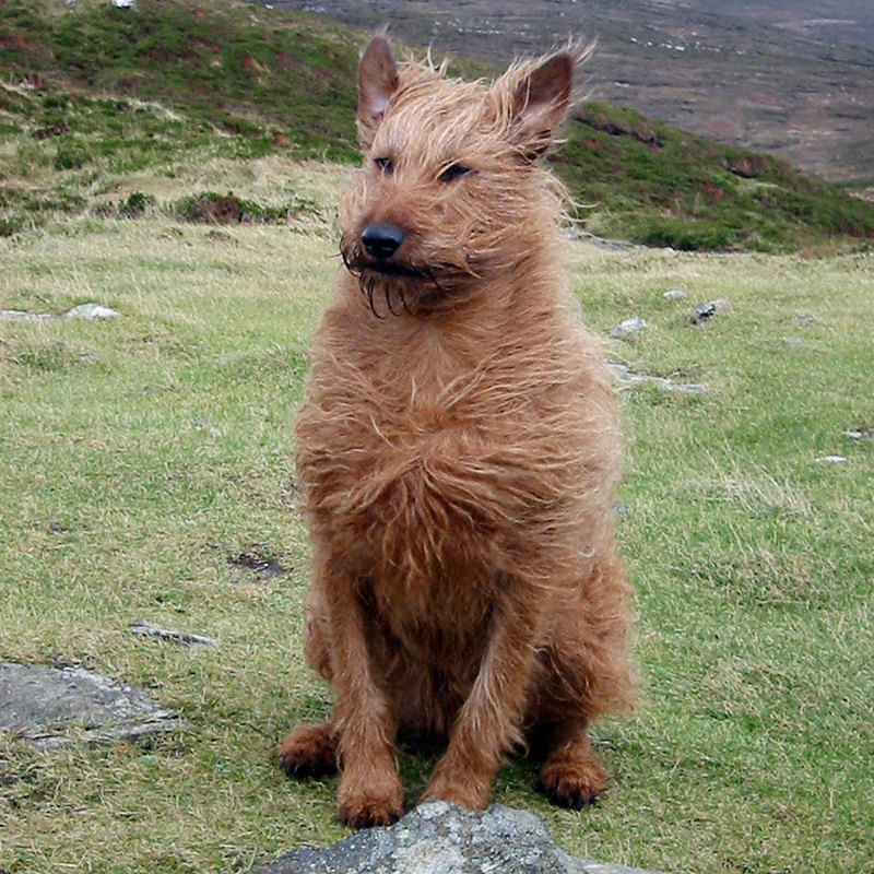 Windswept Rusty on Knockalla.