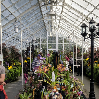 CANCELLED: Northwest Orchid Society's Spring Show & Sale