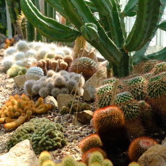 POSTPONED: Growing Cactus and Succulents with Karen Summers