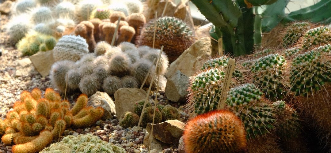 POSTPONED: Growing Cactus and Succulents with Karen Summers
