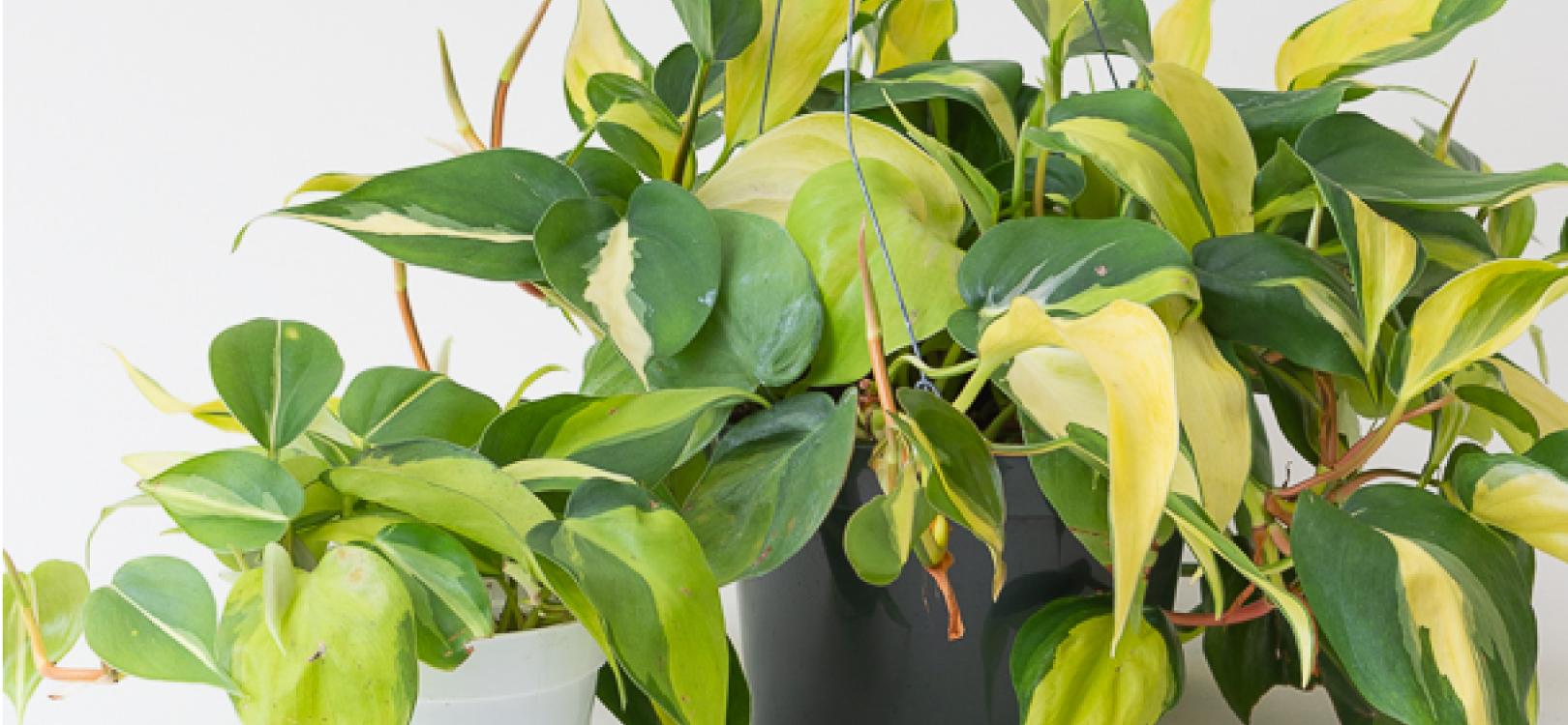 Virtual Plant Pop-Up Sale!