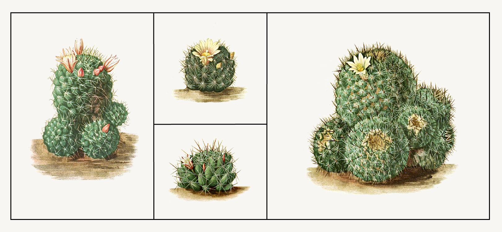 Cacti Terrariums: Online workshop and supply kit