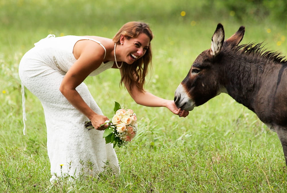 A bride reaching down and petting a donkey
