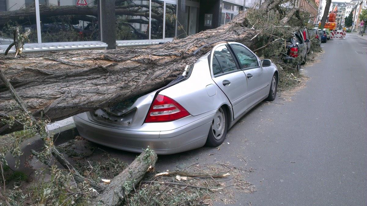 Auto uvězněné pod padlým stromem.