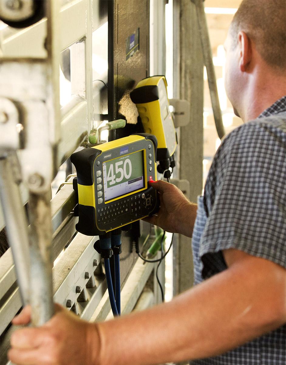 Sistema de pesaje para vacas Tru-Test con jaula en el fondo