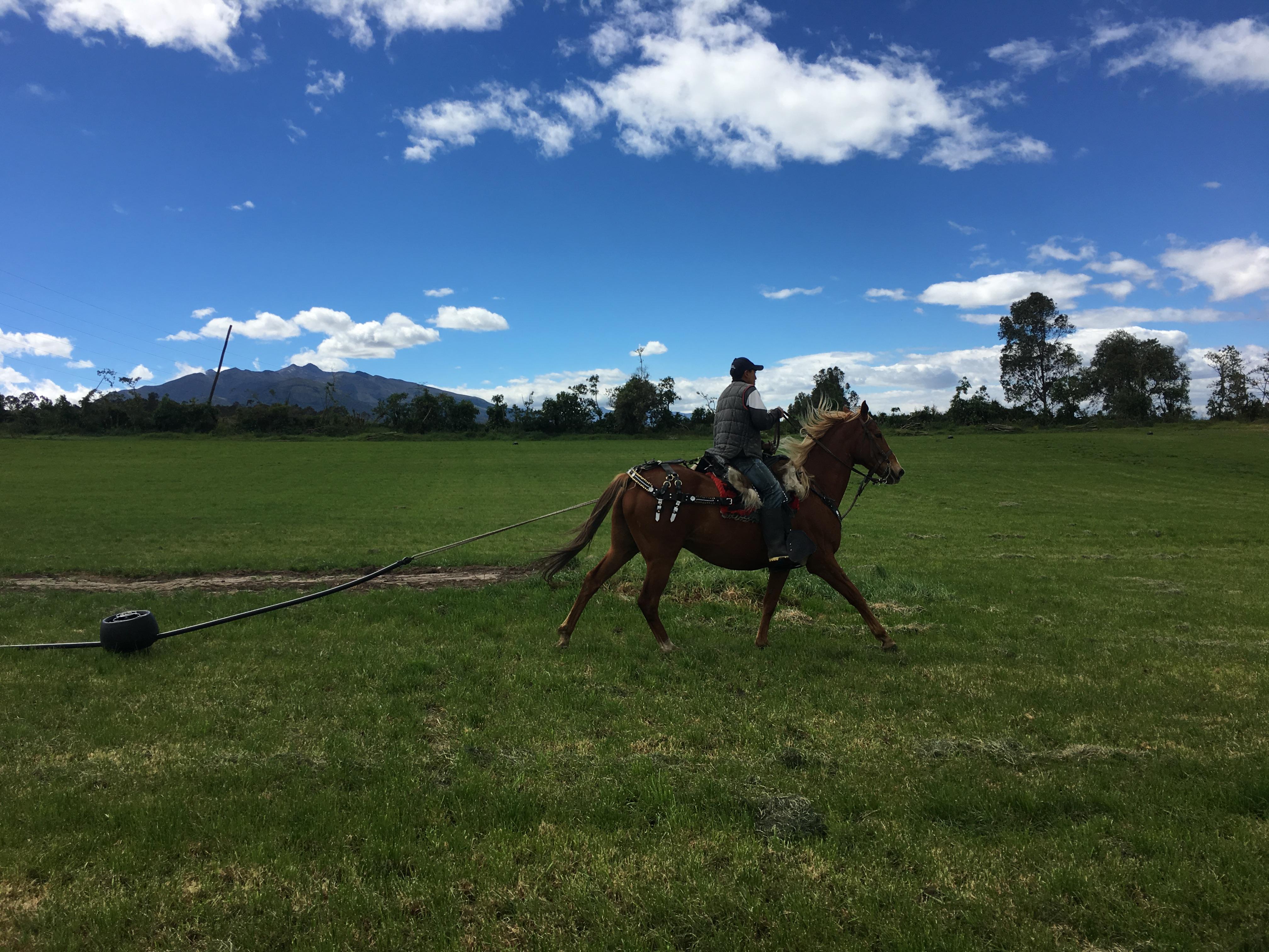 Sistema de riego móvil para pasturas K-Line jalado por un caballo en Machachi Ecuador.