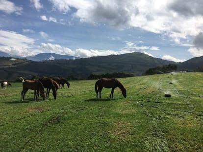 Sistema de riego k-line de aspersion lenta para pasturas con caballos en el potrero