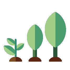 3 nieuwe bomen die groeien in duurzaam bos
