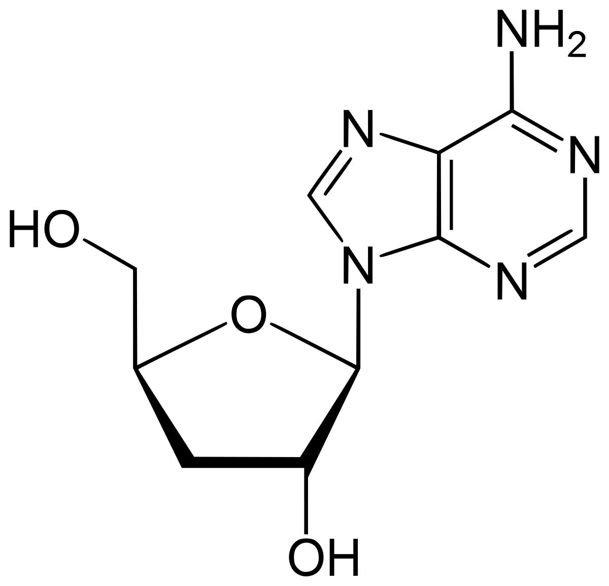 Công thức hóa học của Cordycepin