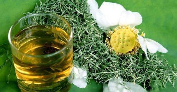 Điều trị gan nhiễm mỡ nhờ trà lá sen