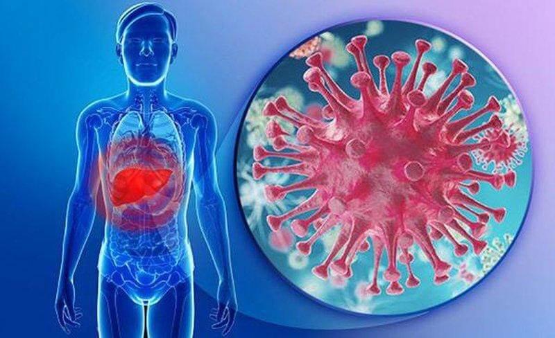 virus gây hại cho gan