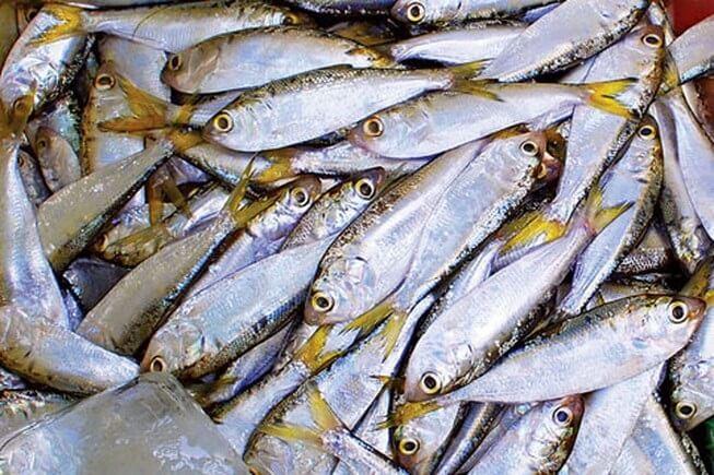 Cá Mòi giàu omega 3