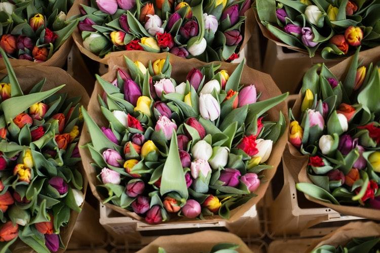 amsterdam en 2 jours marché aux fleurs