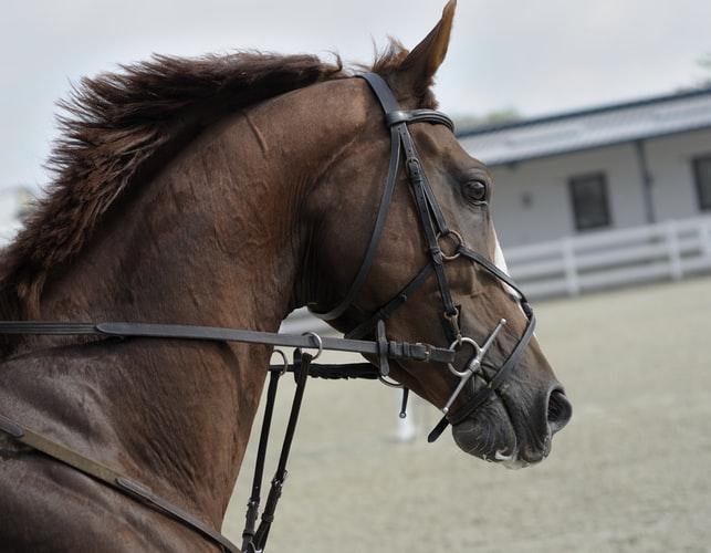 vienne cheval