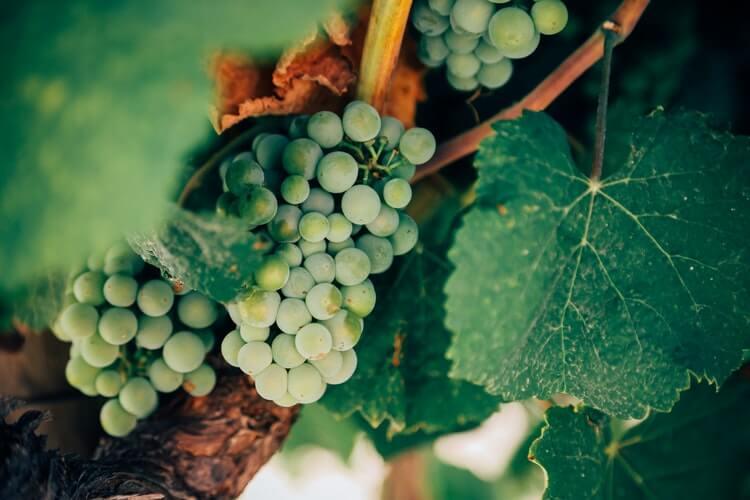 vin blanc dégustation cinque terre