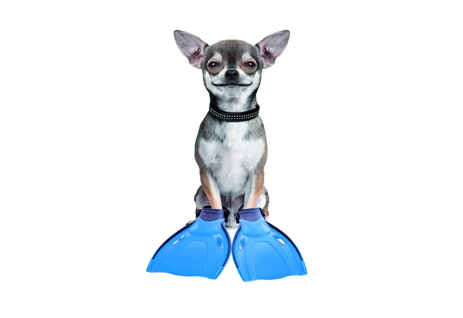 Snuffelsportpas ankeiler hondje met flippers
