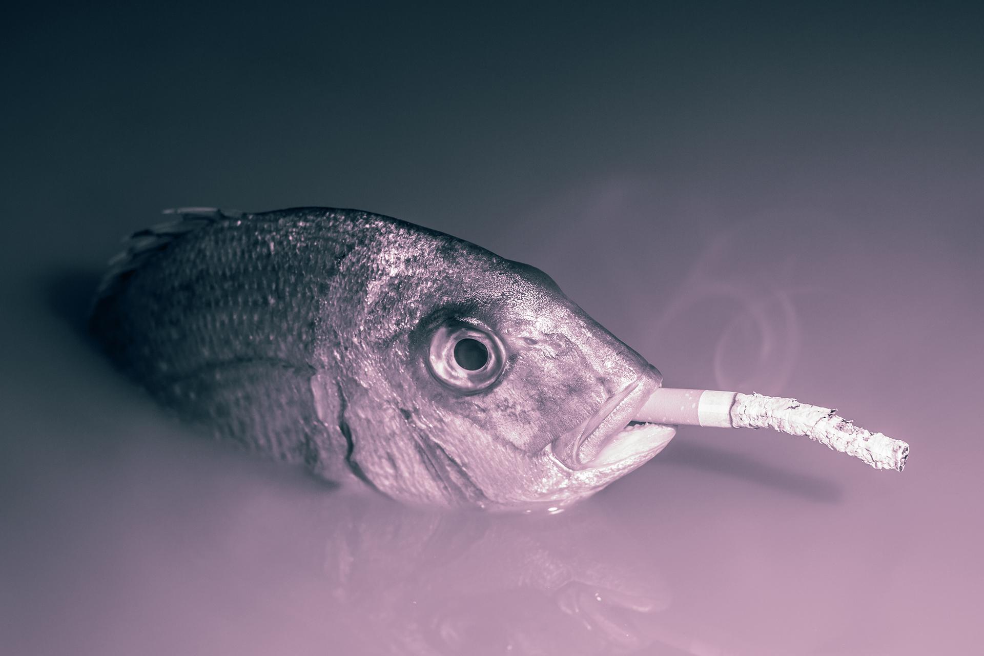 """""""Smoked Salmon"""""""