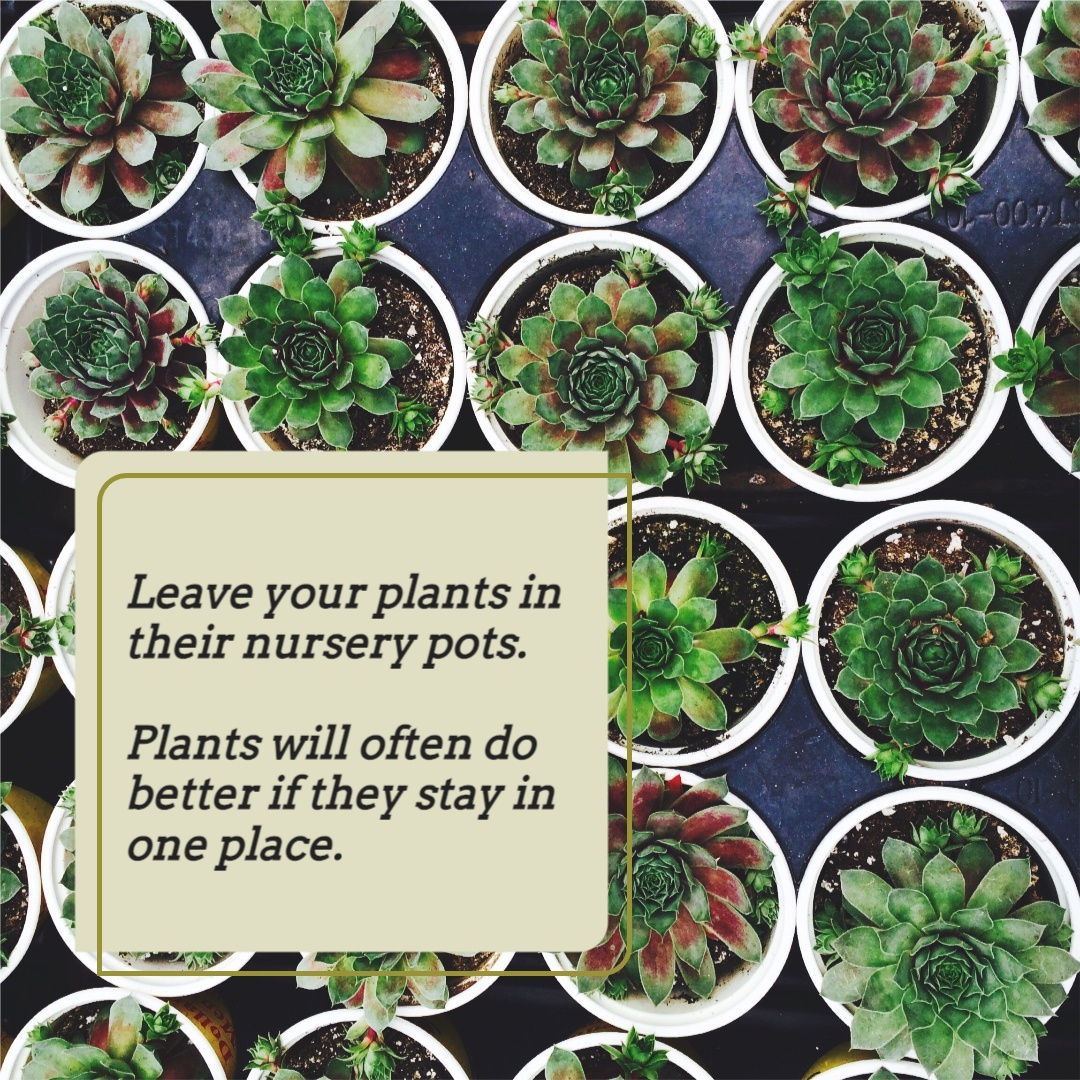 The second plant carousel image. It says: leave your plants in their nursery pots. Plants will often do better if they stay in one place.
