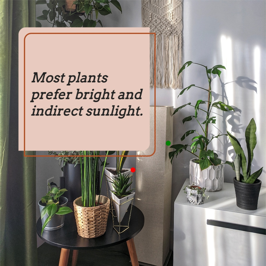 Image 4 in the carousel. It reads: most plants prefer bright and indirect sunlight