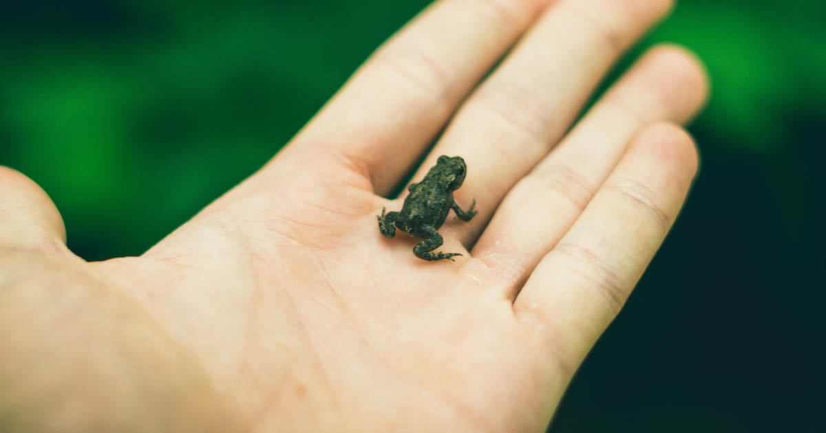 holding a baby frog