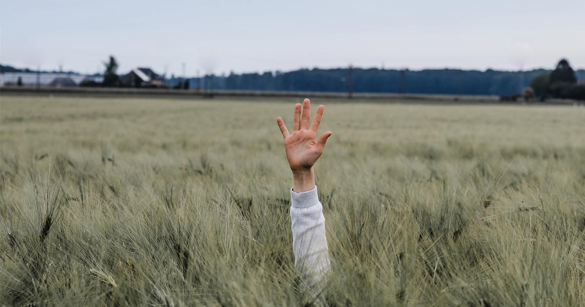 person reaching their hand out in a field of long grass