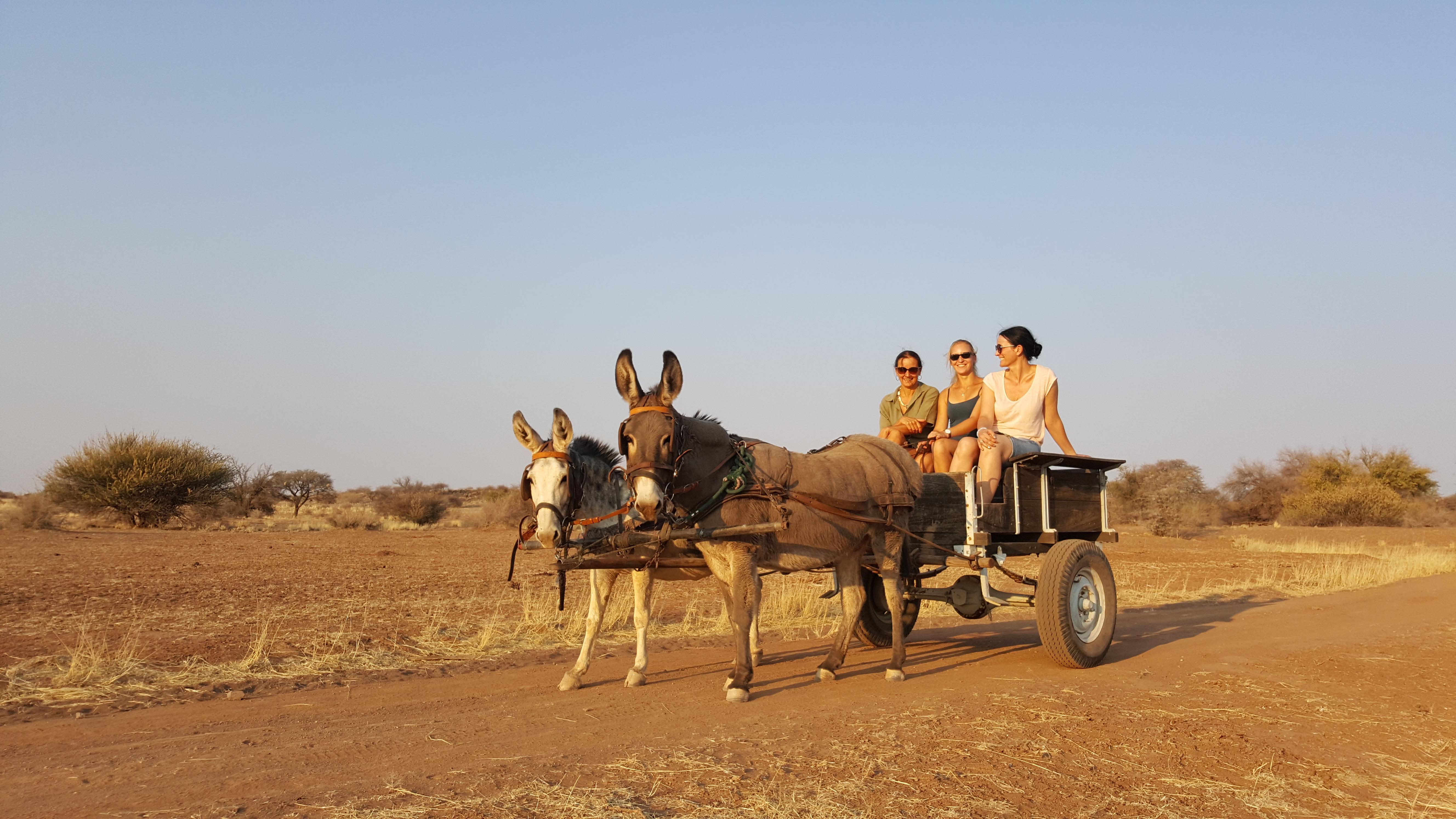 Donkey Car on Boscia Namibai