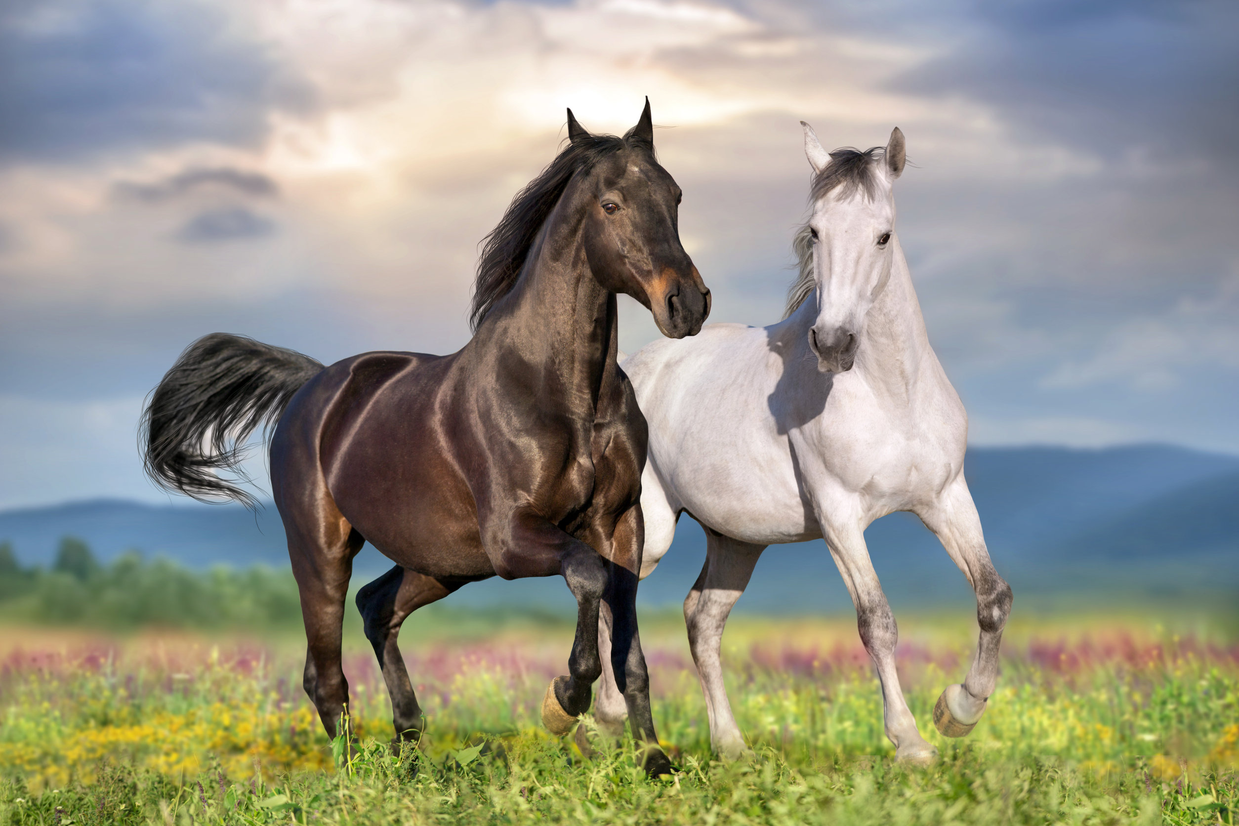 A white and black horse in a field.