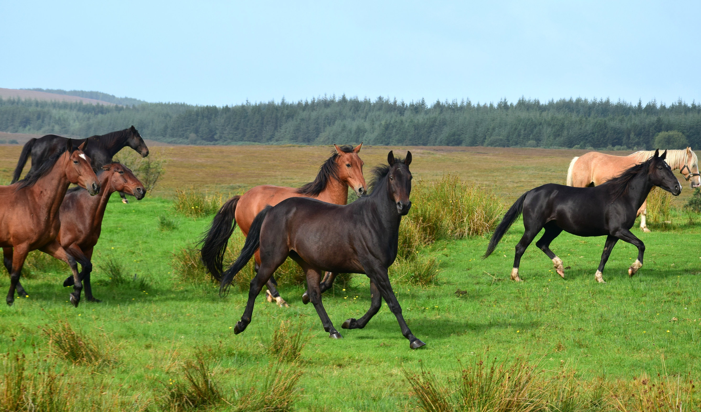 A group of horses in a field.
