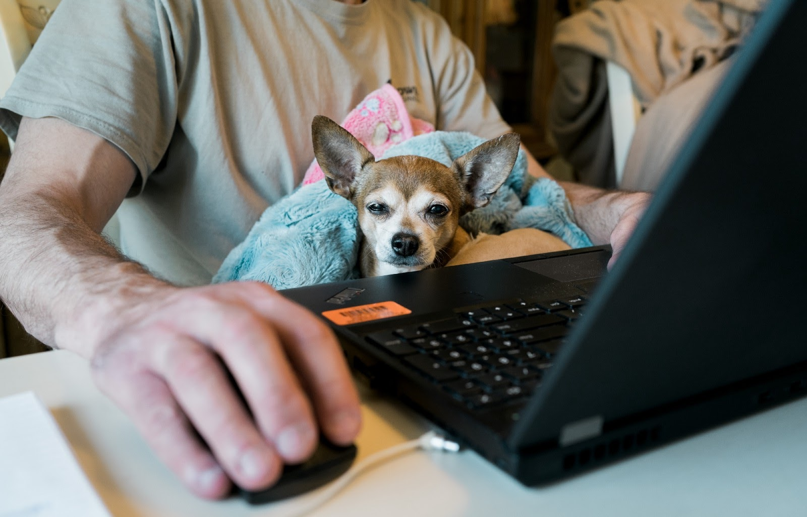 Person holding a dog while using a laptop. Photo by Allie on Unsplash.