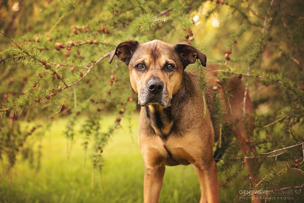 Photo grand chien à l'automne