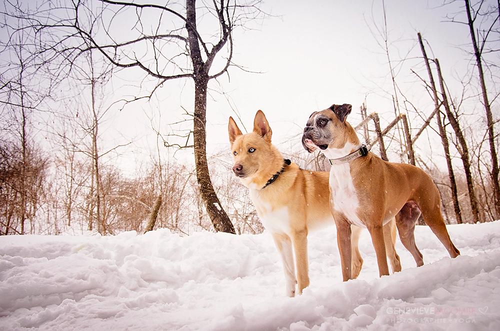 Photo de chiens en hiver