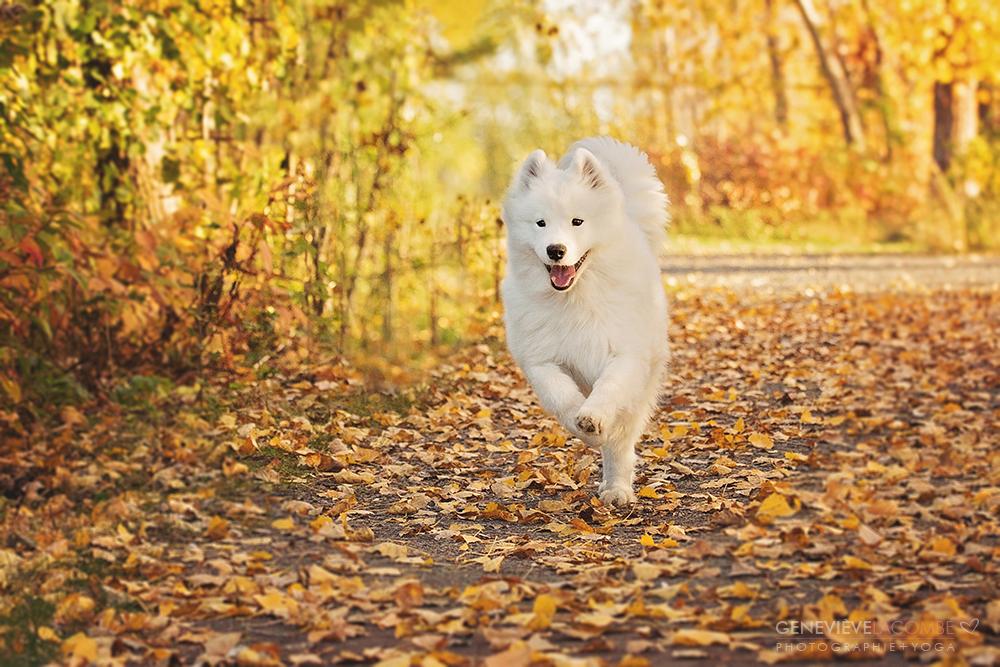 Photo de chien à l'automne