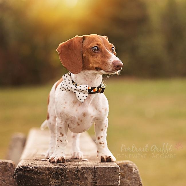 Petit chien avec noeud papillon