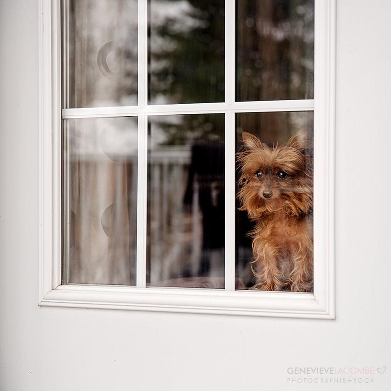 Petite chien qui regarde par la fenêtre