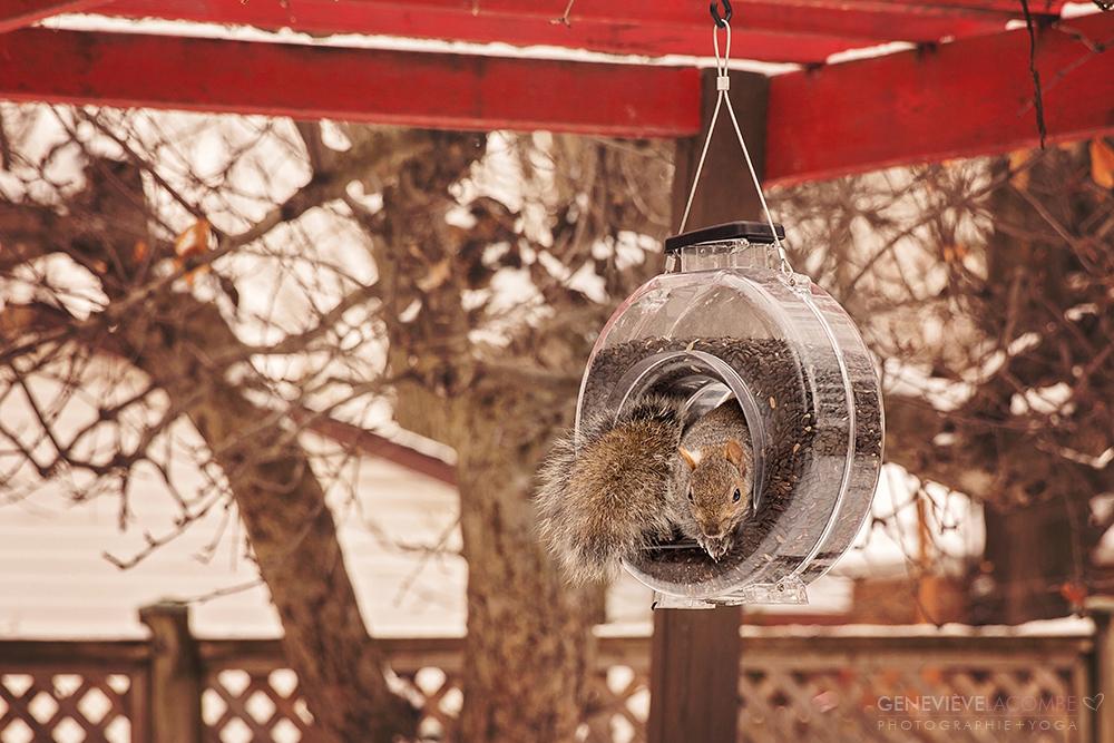 Écureuil dans une mangeoire à oiseaux.