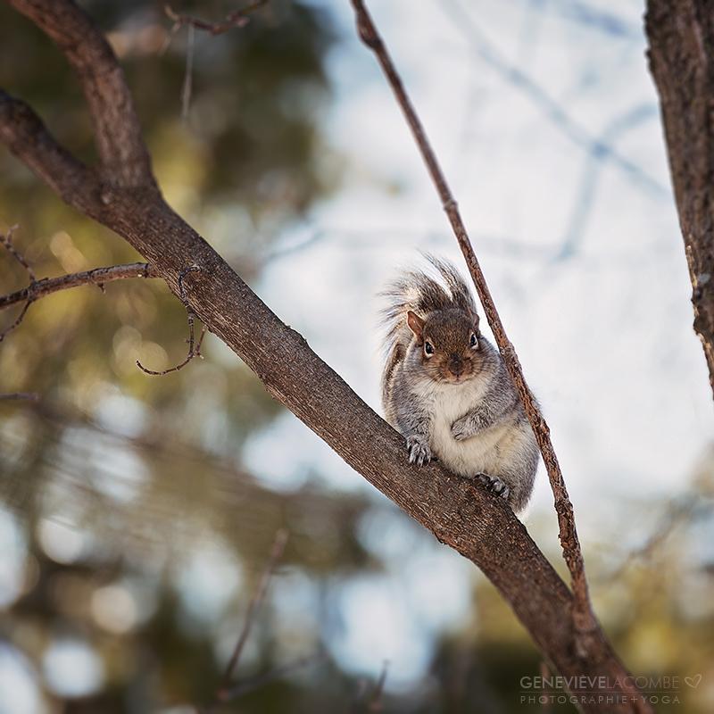 Écureuil perché dans un arbre.