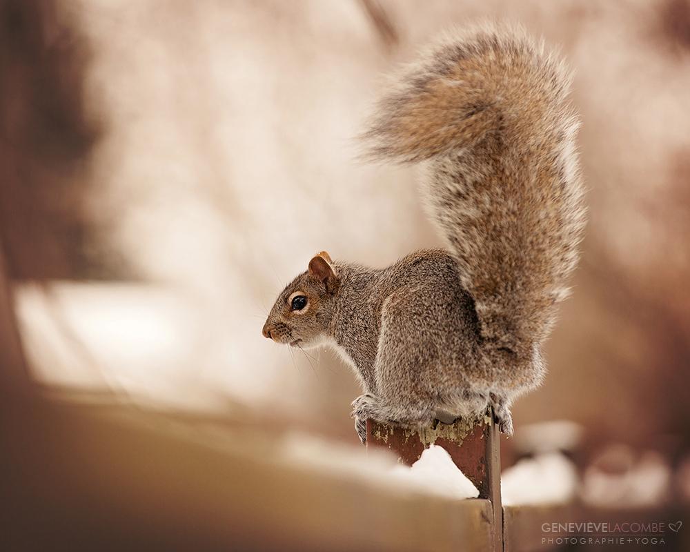 Écureuil sur une clôture