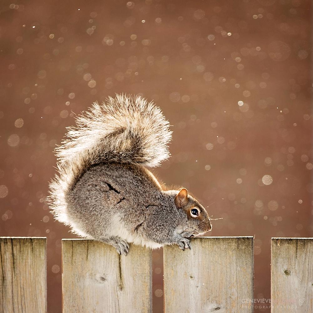 Écureuil qui fait du yoga
